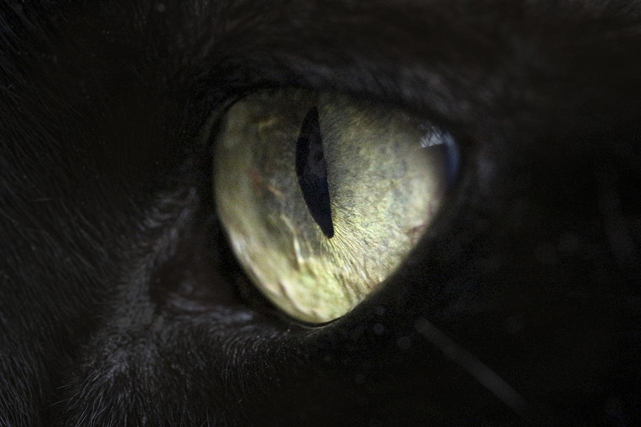 Fotografia macro. L'occhio di un gatto nero. Foto di Luca Finessi.